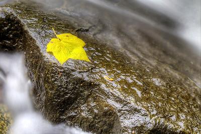Fall Leaf in the Rapids