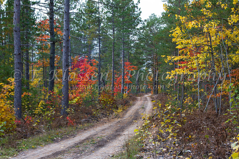 A road with fall foliage color through the deciduous forest of the Uppper Peninsula of Michigan, USA.