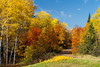 A road with fall foliage color through the deciduous forest of the Upper Peninsula of Michigan, USA.
