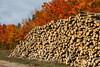 A pile of logs with fall foliage color from logging operations near Paulding, Michigan, USA.