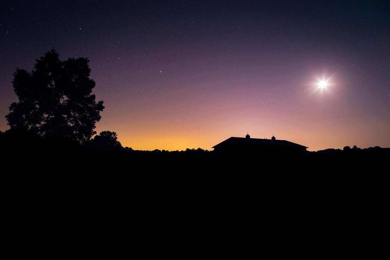 Midnight Silhouettes