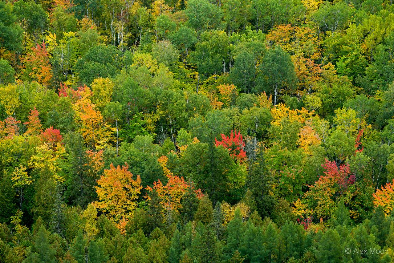 Autumn Abstract