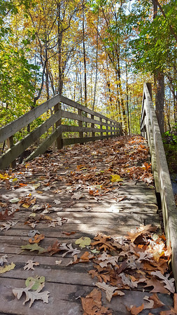 Fallen Leaves on Wooden Bridge