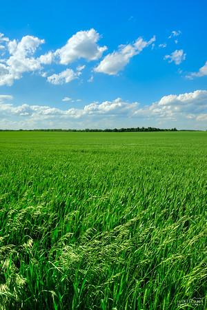 County Field