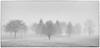 Trees in Fog, Eaton Rapids