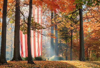 Autumn Flag In Trees