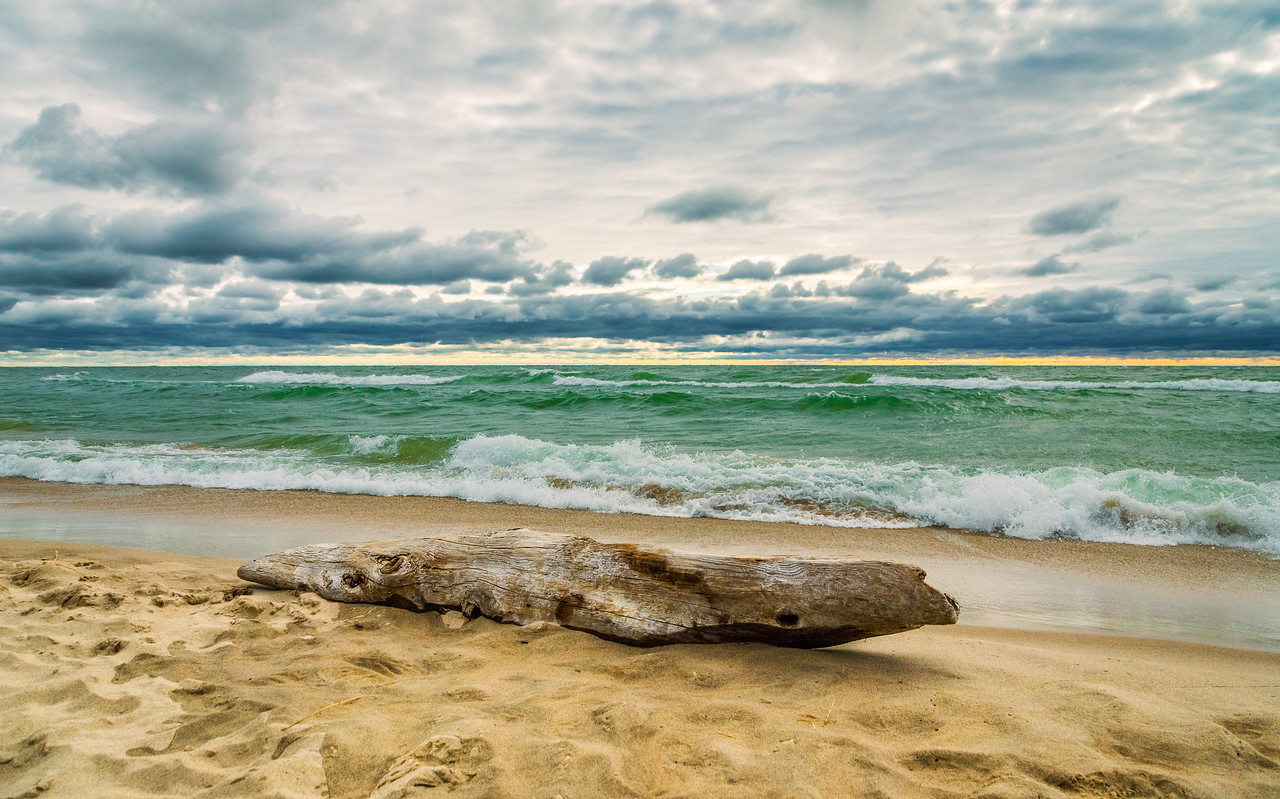 Lake Michigan Driftwood