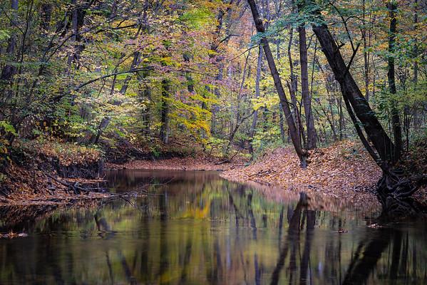 Fall color along Sand Creek.  Aman Park, Grand Rapids, MI