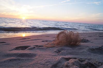 Scruffy Sunset