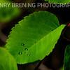 Henry Brening Photography