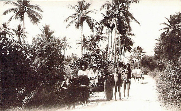 Carts pulled by water buffalos on Saipan, about 1920