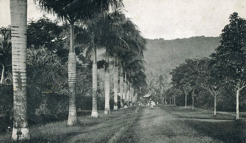 A broad, tree-lined walkway on Pohnpei during the period of Japan's South Seas Mandate