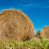 Hay bale rolls in a green field
