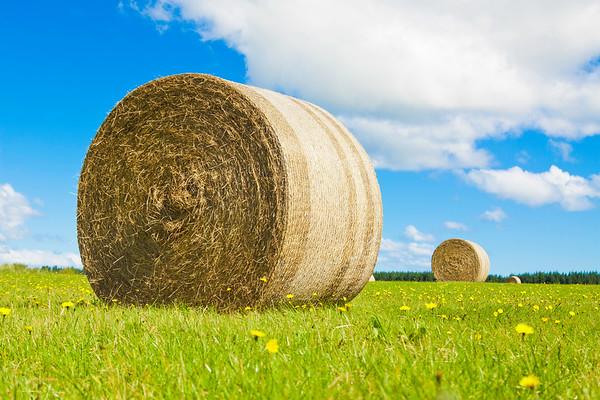 Big hay bale rollin a lush field