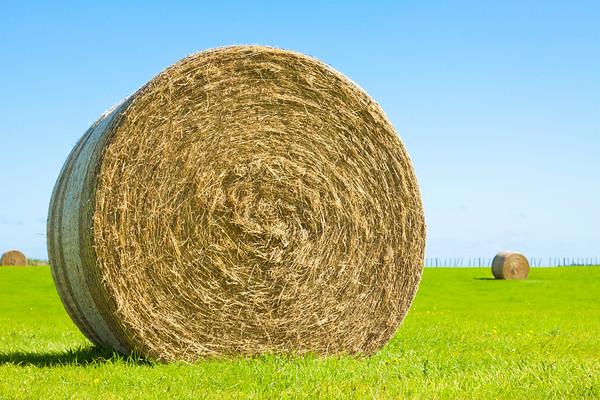 Big hay bale roll in a green field