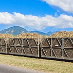 Cane train loaded with sugar cane