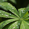 Beautiful green leaf with dew drops