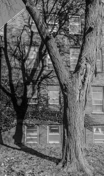 Galesburg - Tree Shadow-01011
