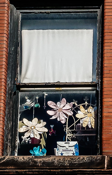 Galesburg IL - Flowers in Window-00931