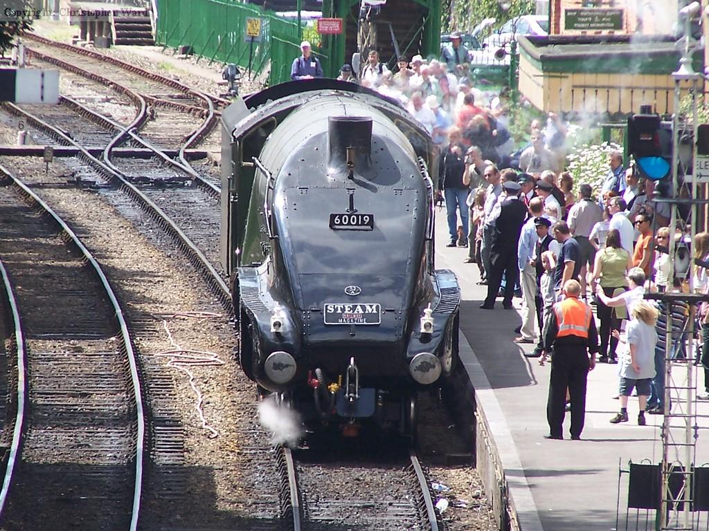 Bittern sits in Alresford platform