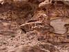 Stone, Petra