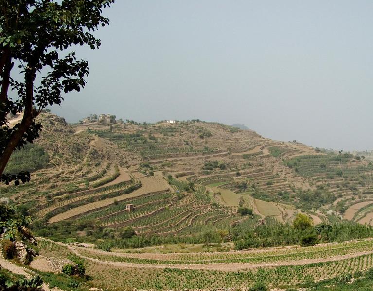 Terraced land near Hajjarah