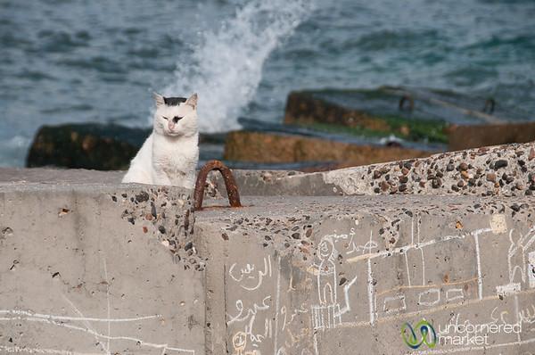 Egyptian Cat on Alexandria Coast