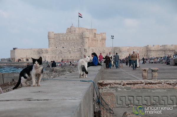 Cats and the Qaitbay Fortress - Alexandria, Egypt