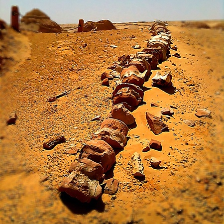 42 million year-old fossilized whale vertebrae, Wadi al Hitan #UNESCO #WeVisitEgypt @LoveEgypt