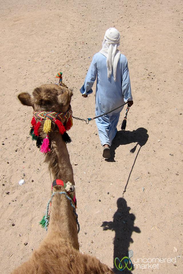 Leading the Camel - Hurghada, Egypt