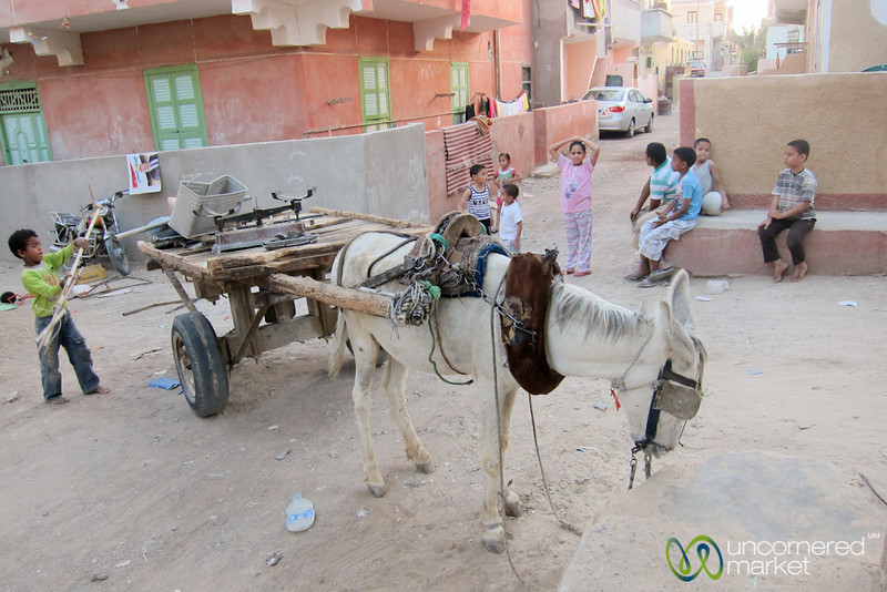 Donkey Cart and Street Scene - El Quseir, Egypt