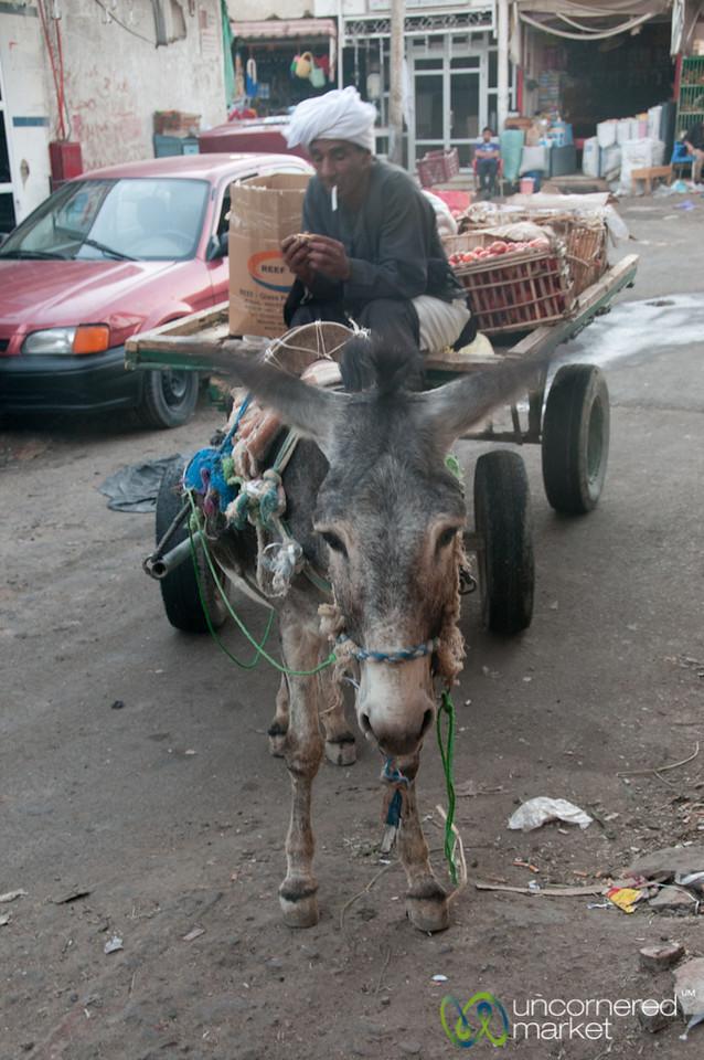 Donkey Cart at Hurghada Market - Egypt