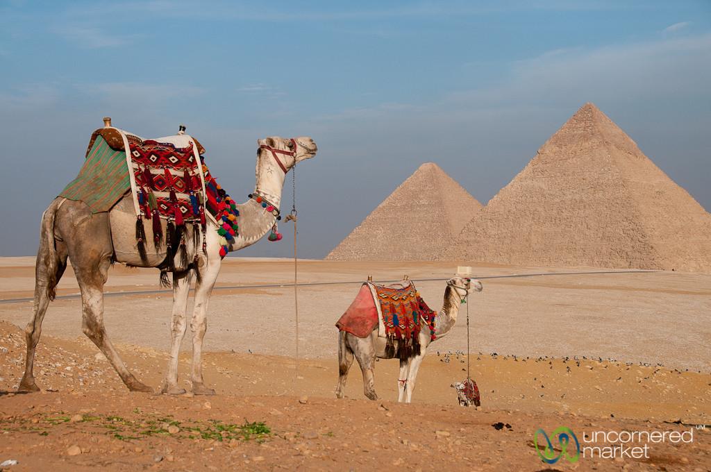 Camels at Great Pyramids of Giza - Egypt