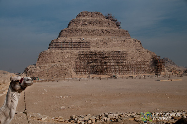Camel with Saqqara Pyramid - Egypt