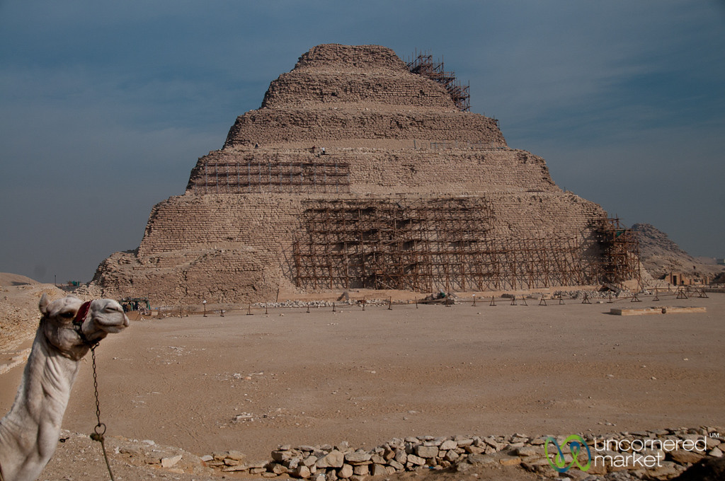 Camel with Saqqara Pyramid - Egypt