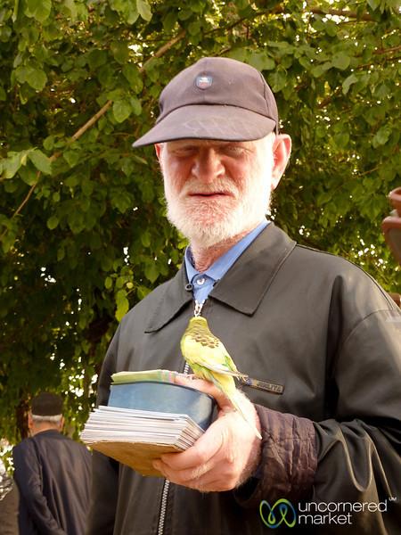 Blind Fortune Teller with Bird - Shiraz, Iran