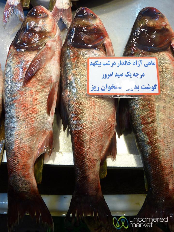 Fresh Fish at Rasht Market, Iran