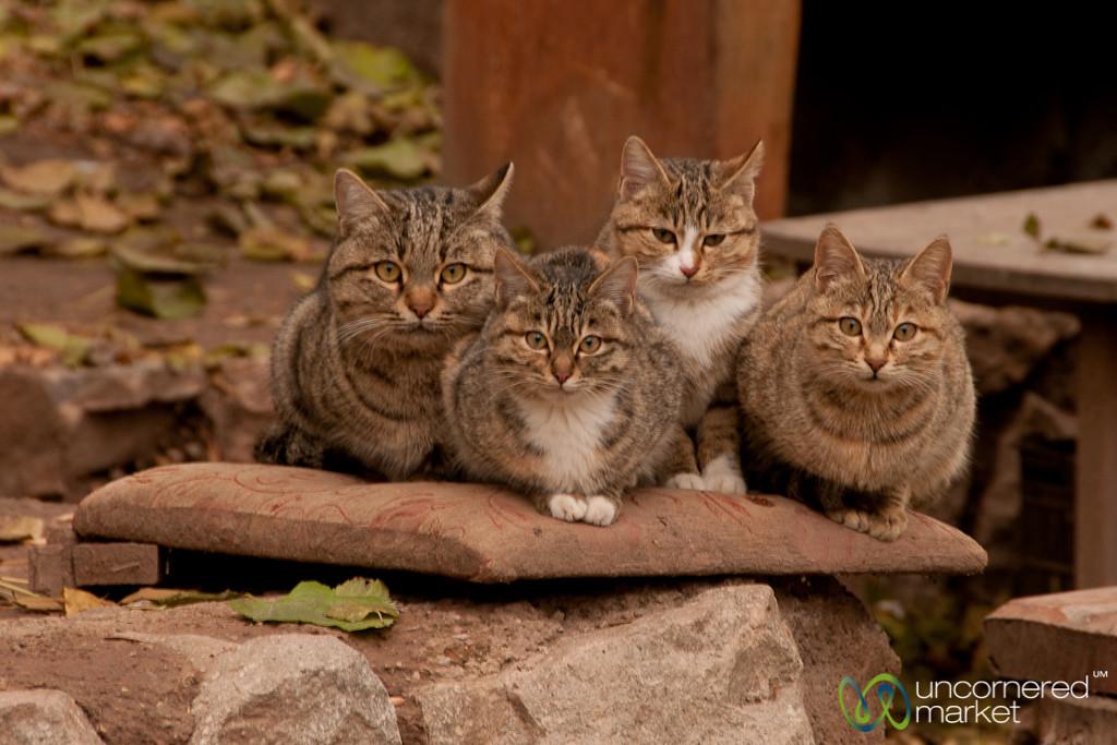 Cats Lined Up at St. Stephanos - Jolfa, Iran