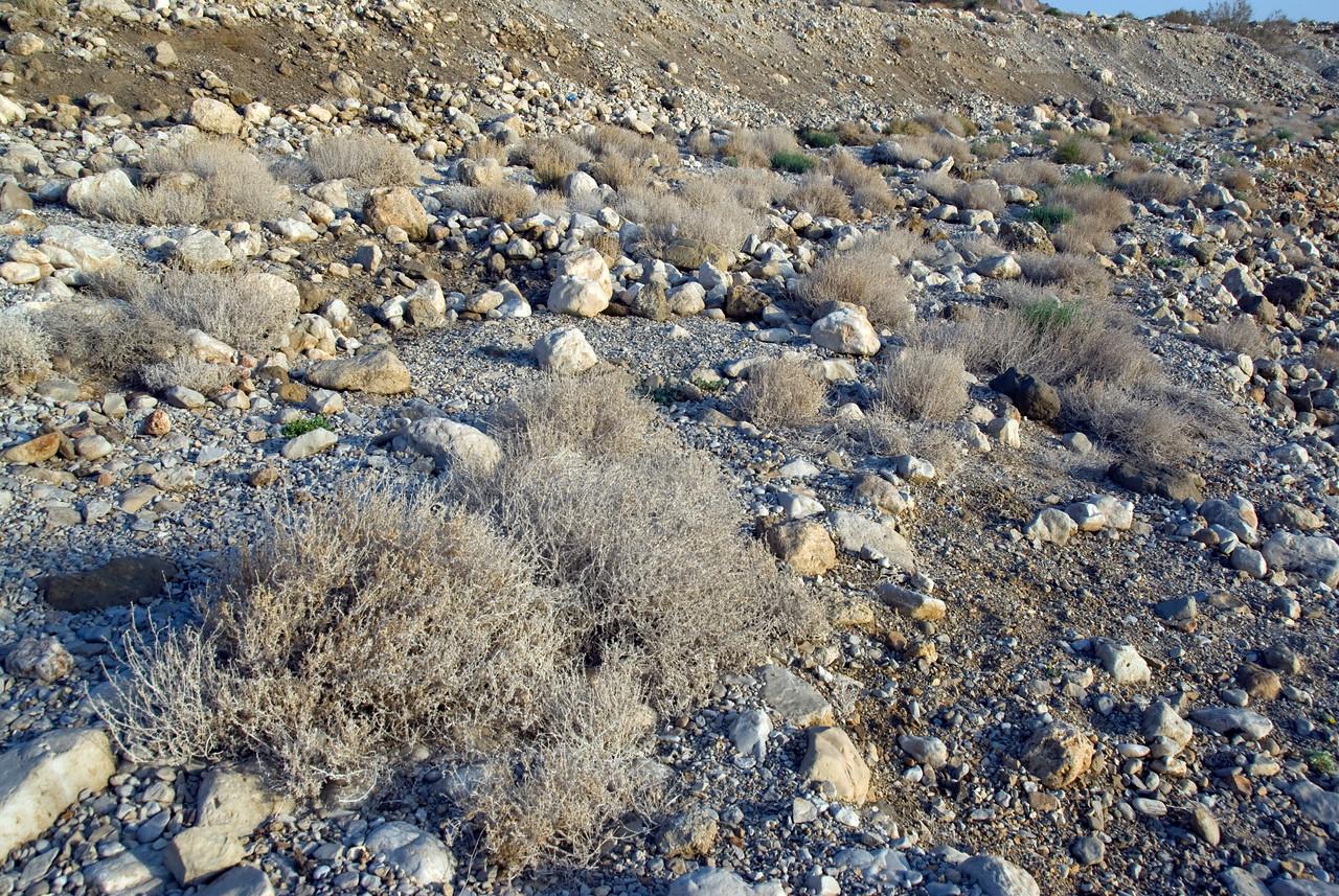 Brush near Dead Sea in Israel