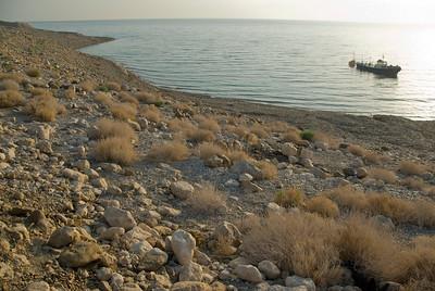 Brush near the coast of Dead Sea in Israel