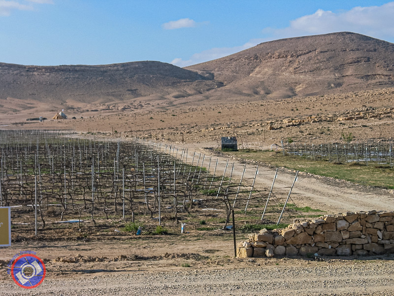 A Vineyard Deep into the Negev (©simon@myeclecticimages.com)