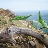 Nahal Betset Fauna Crop