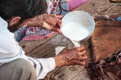 Collecting milk in Feynan, Arabah, Jordan