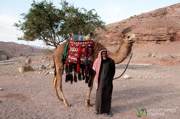 Camel, a Bedouin's Best Friend - Feynan, Jordan
