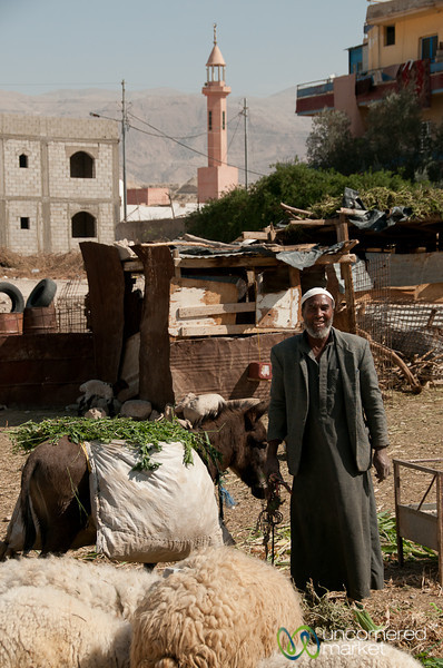 Shepherd with his Trusty Donkey - Ghor el Safi, Jordan