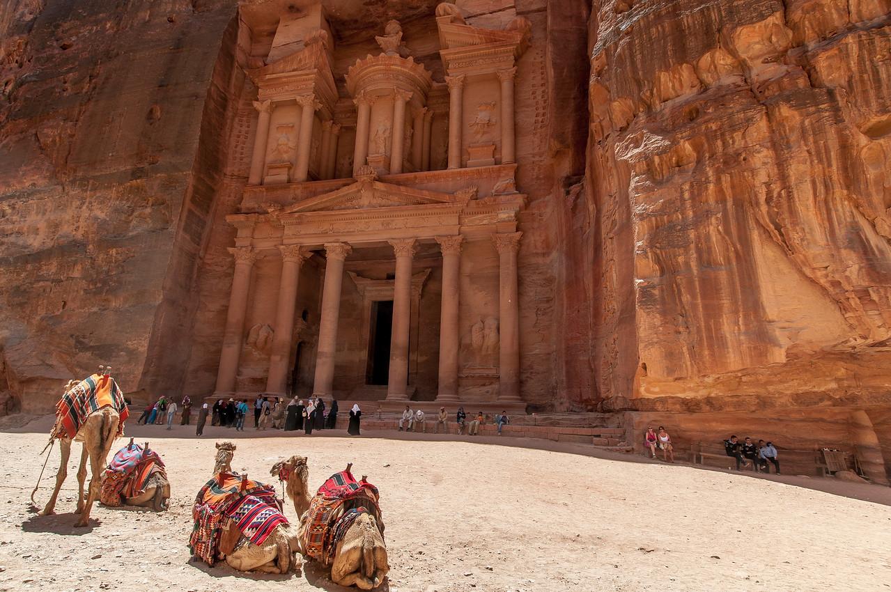 Camels at The Treasury Building in Petra, Jordan