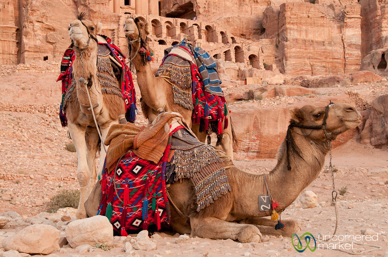 Camels at the Royal Tombs - Petra, Jordan