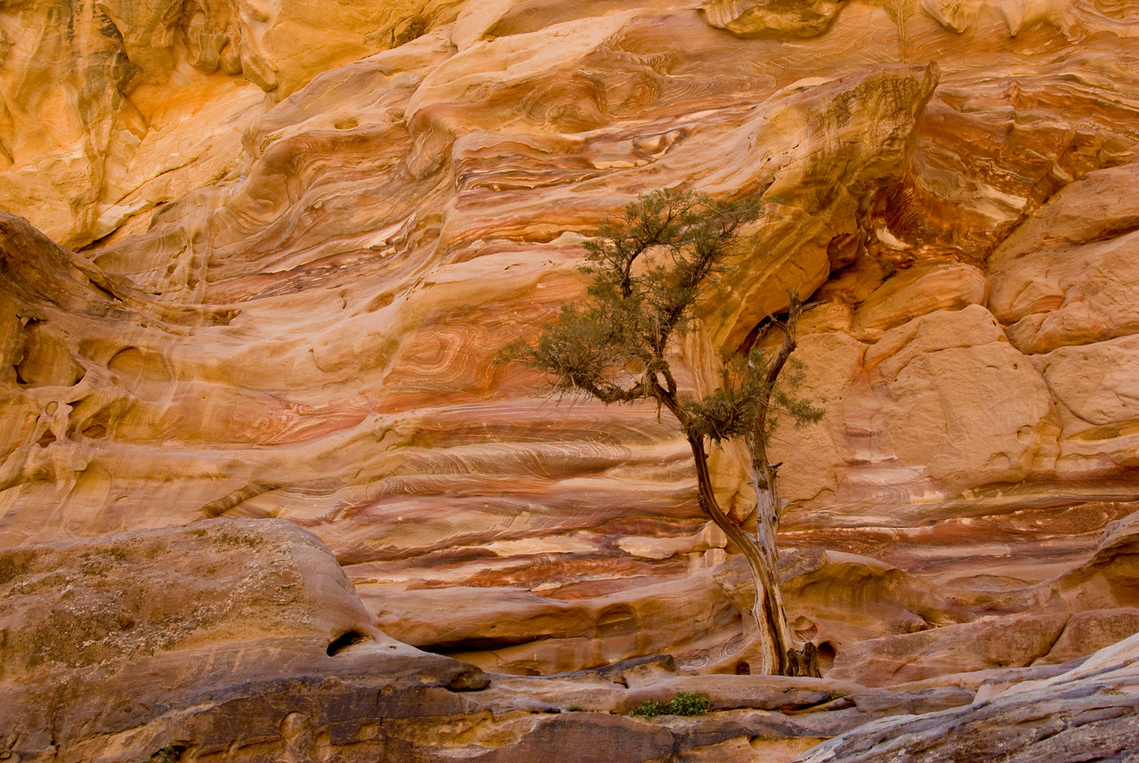 Solitary tree in Petra, Jordan