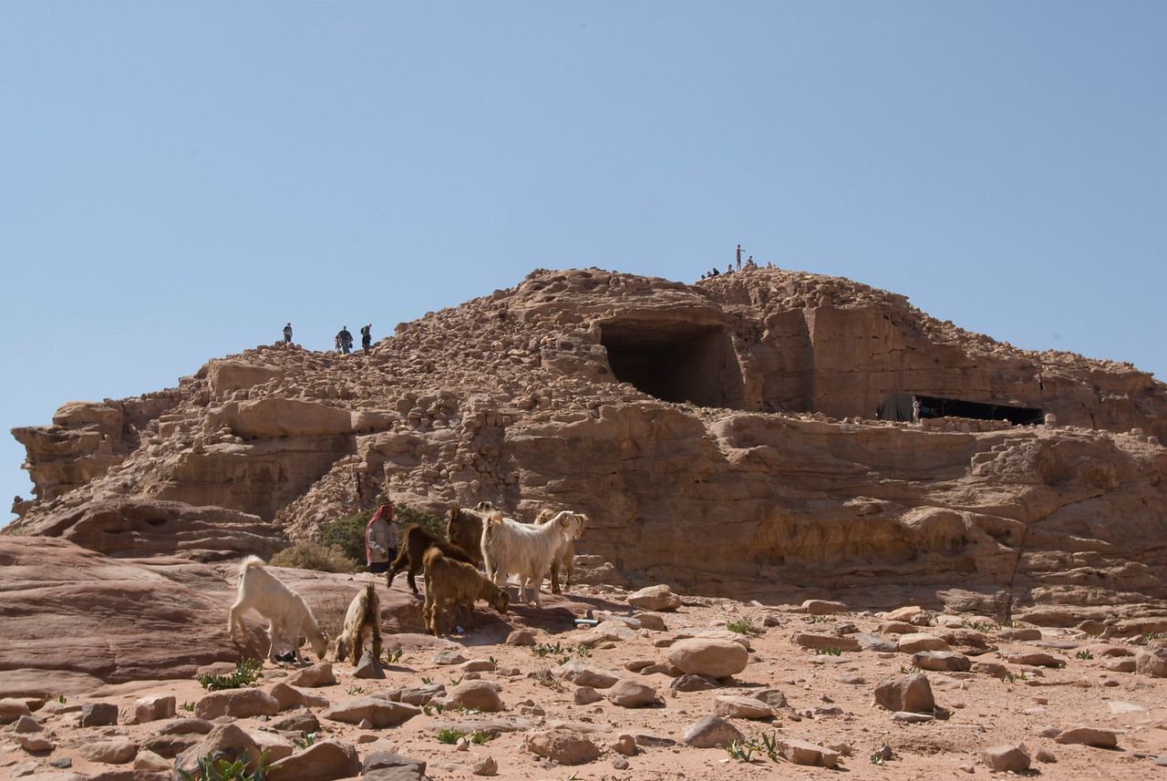 Goats near the cave dwellings in Petra, Jordan