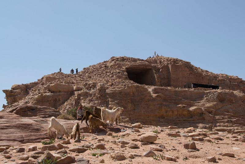 Goats near stone dwellings in Petra, Jordan
